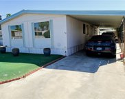 396     Wolf, Cathedral City image