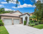 20334 Chestnut Grove Drive, Tampa image