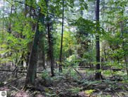 Lot 9 S Micheals Woods Trail, Maple City image