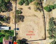 28052     Dalmatian, Modjeska Canyon image