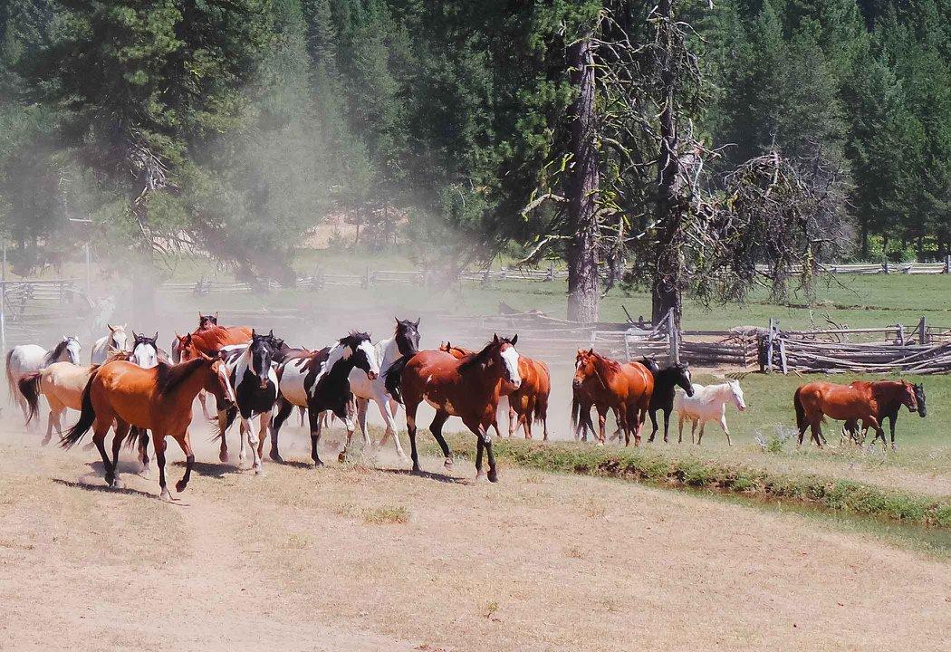 Horses running in Idaho