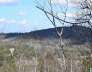 Highway 231 Unit Parcel 010.000, 20 ac in Section 25-T12S-R1E, Oneonta image