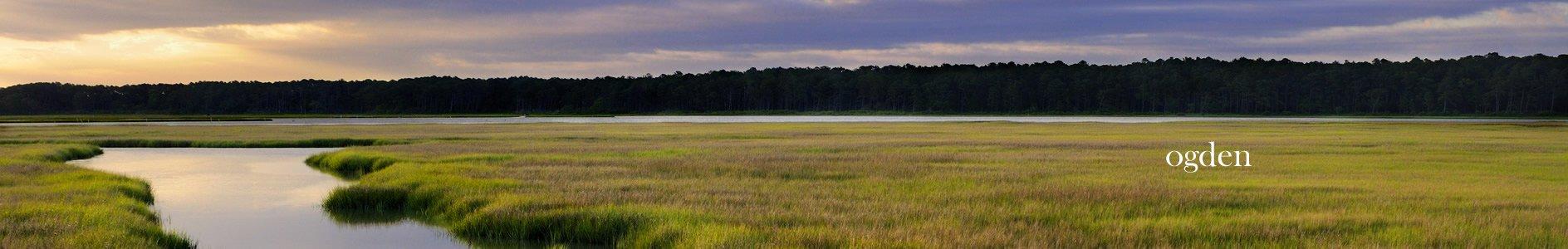 Marsh Ogden