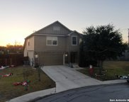 604 Whooping Crane, New Braunfels image