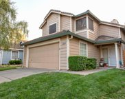 8966  Weeping Fig, Elk Grove image