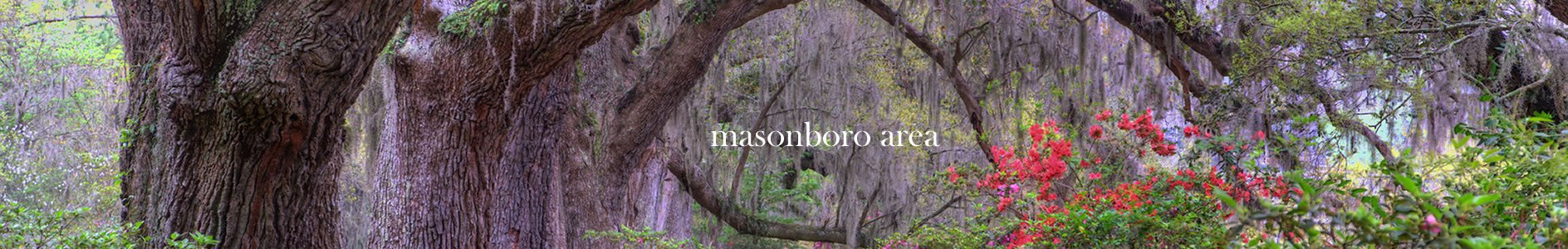 Live Oaks - Masonboro area of Wilmington