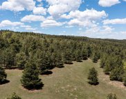 Ponderosa Pine, Beulah image