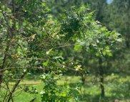 7 Scarlet Sage, Tallahassee image